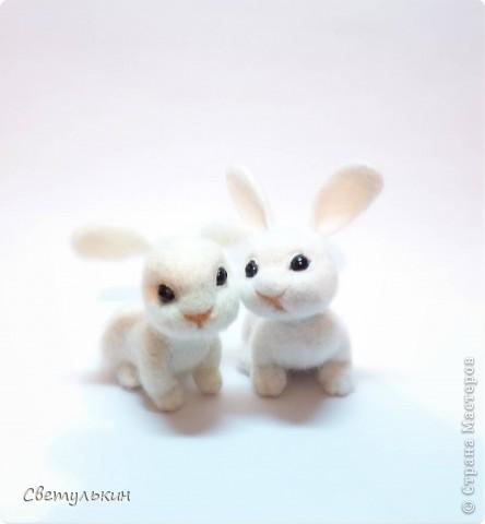 Крольчата фото 2