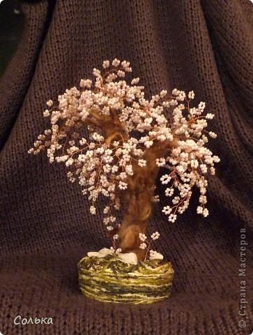 Фантазийная, но точно вишенка. Поскольку расцвела она в ноябре урожай видимо будем собирать как раз к Новому году. ;))) фото 1