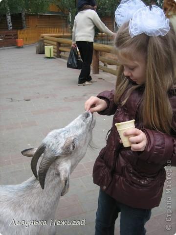 у нас в городе есть зоопарк. дикие звери-птицы в клетках. а некоторые домашние животные отделены перегородкой, за которую можно проходить и кормит-гладить животных. корм продается в зоопарке фото 8