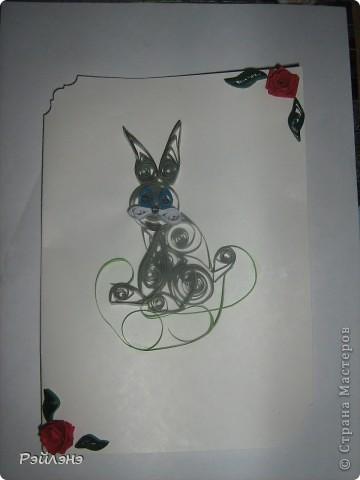 Заяц фото 1