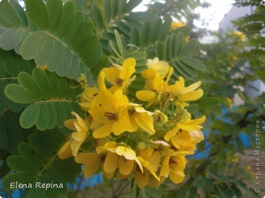 кузнечик из листьев пальмы фото 5