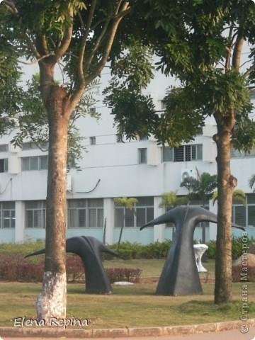 кузнечик из листьев пальмы фото 9