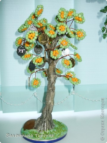 Денежное дерево фото 4
