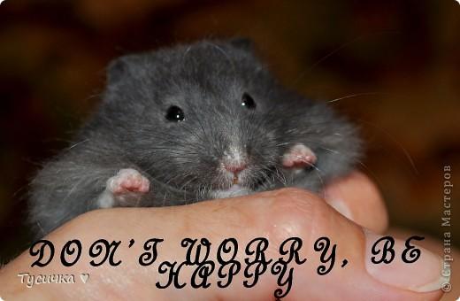 Знакомьтесь, мой хомяк)) Зовут ее Зара. фото 4