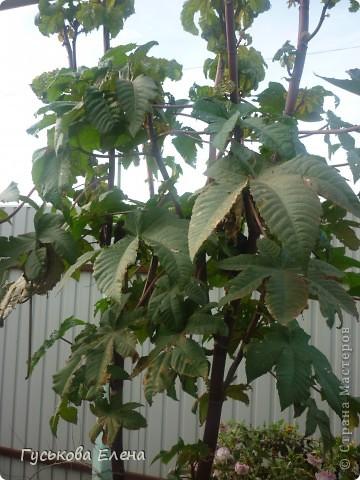 В декабре расцвели колокольчики-они цветут у нас летом. 11.12.2010 г фото 4