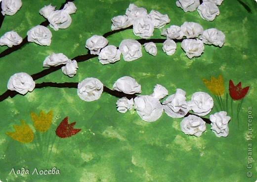 Вишни в цвету фото 7
