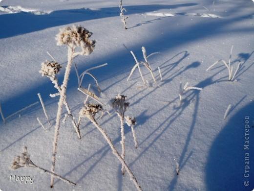 мороз и солнце фото 5
