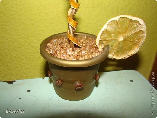 Мои первые две роботы с зернами кофе. Это дерево - сердце и сердце - магнит на холодильник.  фото 4