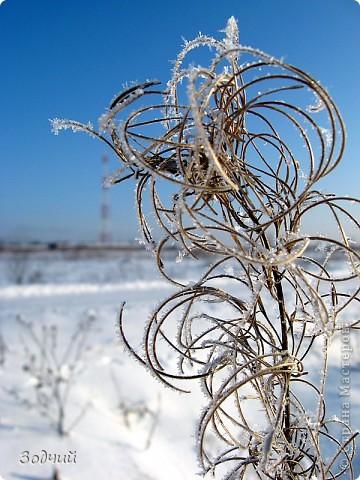 Морозно... фото 8