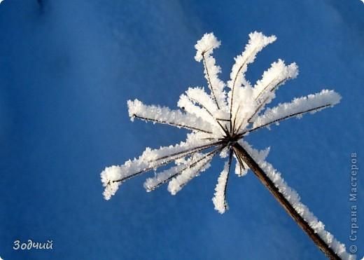 Морозно... фото 2