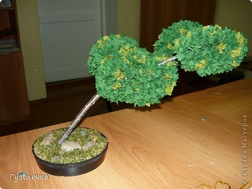 """Японское деревце бонсай выросло у нас на занятии кружка """"Волшебный квадрат"""" фото 1"""