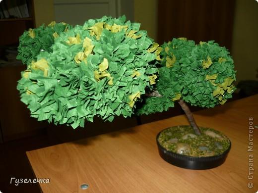 """Японское деревце бонсай выросло у нас на занятии кружка """"Волшебный квадрат"""" фото 2"""