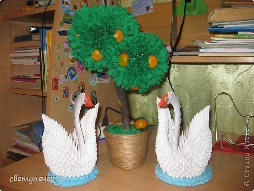 Мандариновое дерево фото 1
