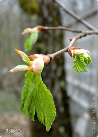 Фрагменты весны... фото 5