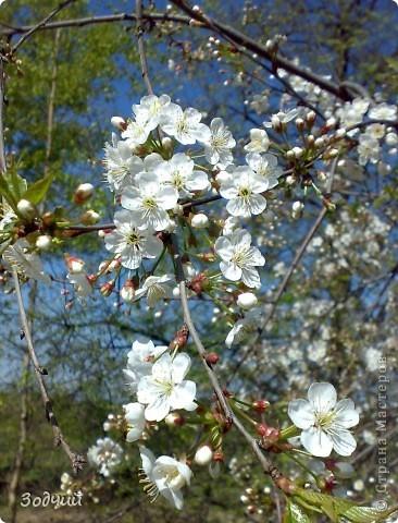 Фрагменты весны... фото 3