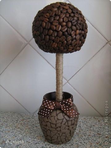 Наконец-то появилось на свет и мое кофейное деревце! Высота дерева 28 см, диаметр кроны 10 см. фото 1