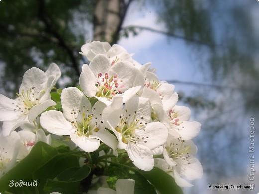 Фрагменты весны... фото 7