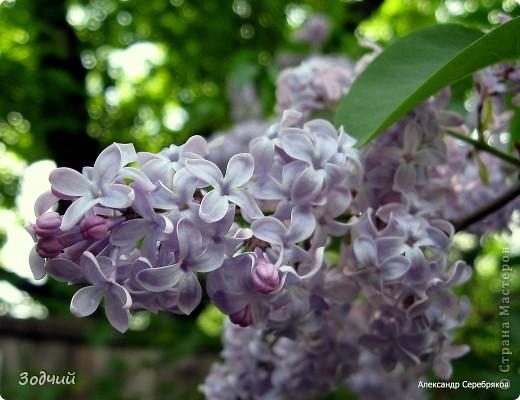 Фрагменты весны... фото 9