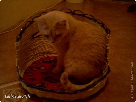 Теперь и моя кошка со своей кроваткой. фото 2