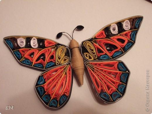 Бабочка на полянке.  фото 3