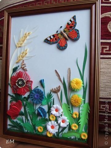 Бабочка на полянке.  фото 1