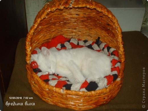 местечко для кота фото 1