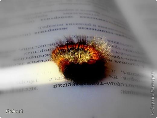 В мире насекомых... фото 5
