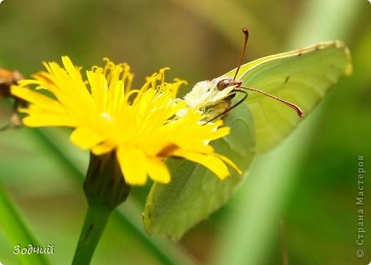 В мире насекомых... фото 2