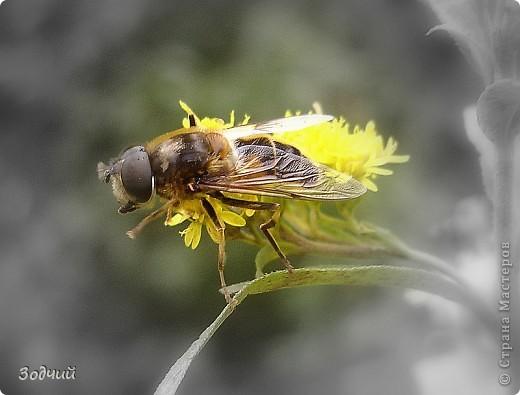В мире насекомых... фото 3