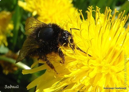В мире насекомых... фото 6