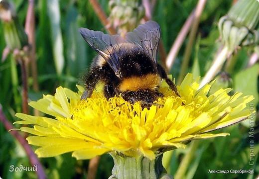 В мире насекомых... фото 8