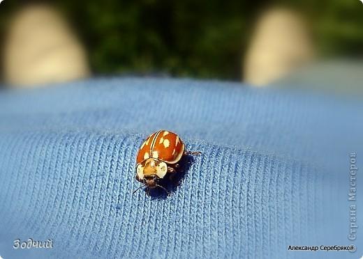 В мире насекомых... фото 7