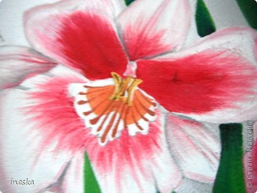 Это орхидеи поближе фото 3