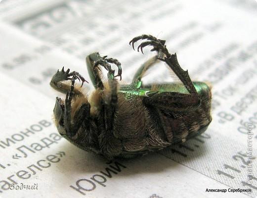 В мире насекомых... фото 9