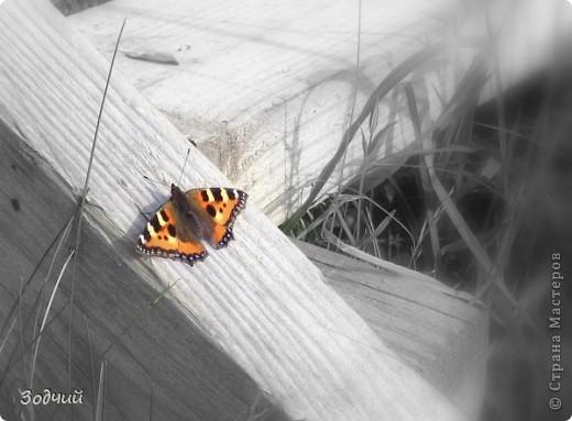 В мире насекомых... фото 10