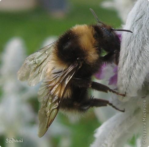 В мире насекомых... фото 11
