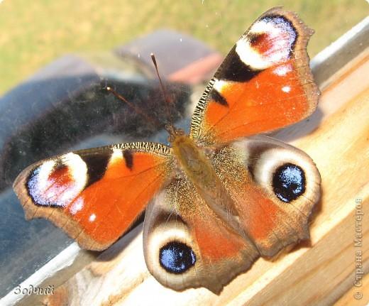В мире насекомых... фото 1