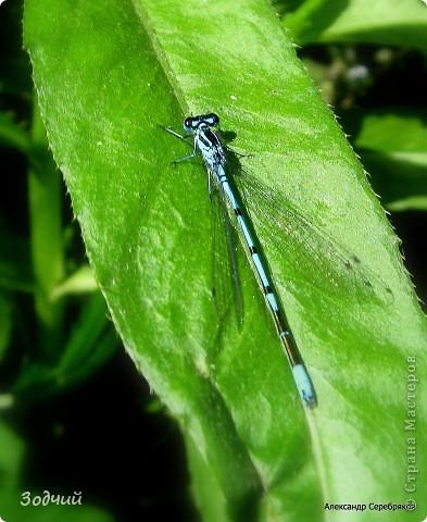 В мире насекомых... фото 12