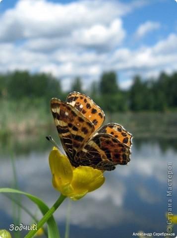В мире насекомых... фото 13