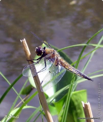 В мире насекомых... фото 14