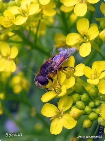 В мире насекомых... фото 15
