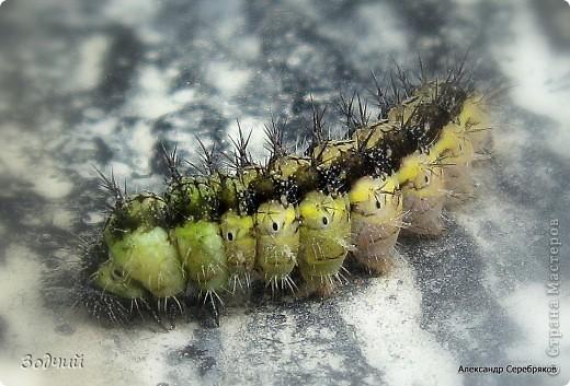 В мире насекомых... фото 16