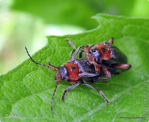 В мире насекомых... фото 17