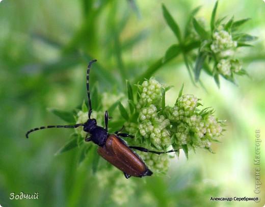 В мире насекомых... фото 18