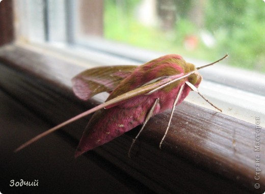 В мире насекомых... фото 19