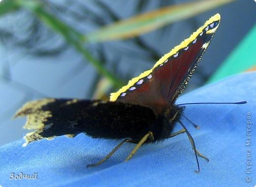 В мире насекомых... фото 21