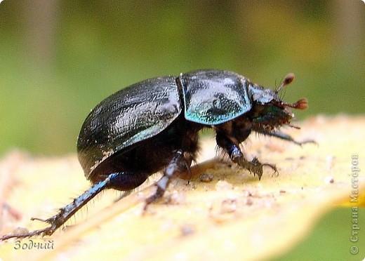 В мире насекомых... фото 22