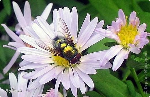 В мире насекомых... фото 23
