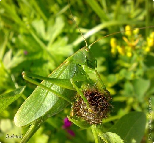 В мире насекомых... фото 20