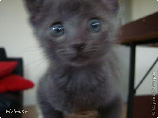 вот такого котёночка мне подарили на день рождения, её зовут Роксана, Рокси, Роксюля, Роксилидзе, Роксичка =)  фото 6